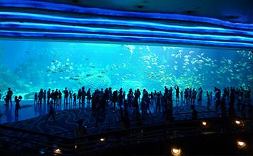 世界最大の水槽