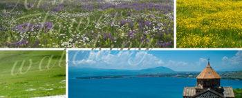 花のコーカサス山麓 アルメニア・フラワーウォッチングの旅