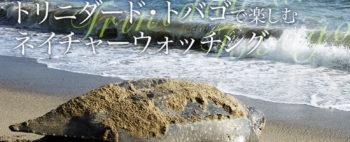 ~ウミガメ最大種オサガメの産卵に出会う~ トリニダード・トバゴで楽しむネイチャーウォッチング