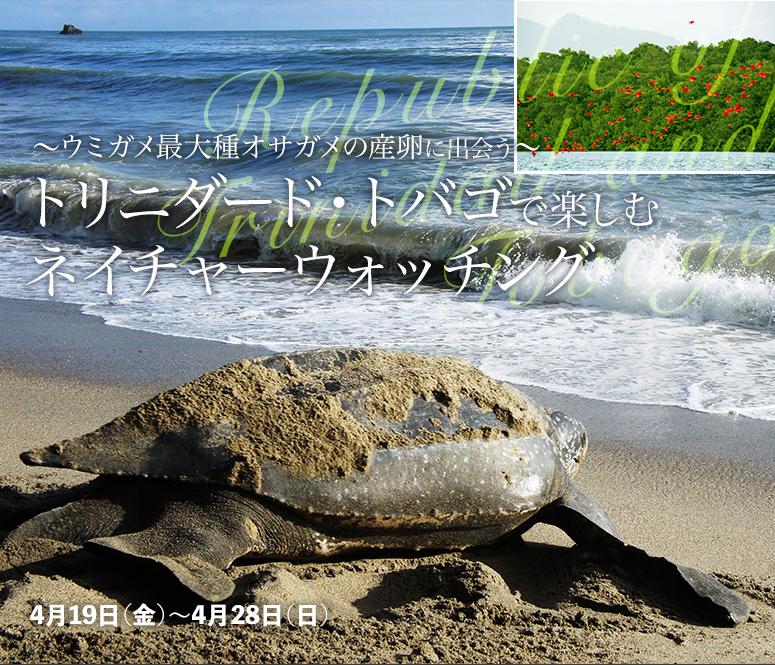 【今年度は終了しました】~ウミガメ最大種オサガメの産卵に出会う~ トリニダード・トバゴで楽しむネイチャーウォッチング【10日間】