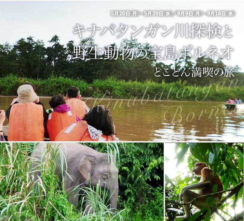 キナバタンガン川探検と野生動物の宝島ボルネオ  とことん満喫の旅【6日間】