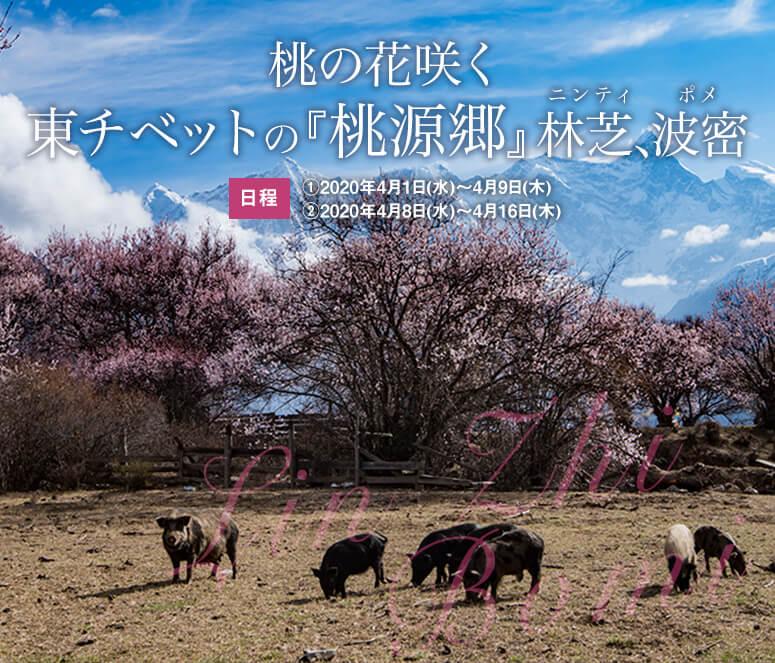 桃の花咲く東チベットの『桃源郷』林芝、波密【9日間】
