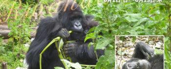 ウガンダ・ルワンダの大自然とゴリラ・トレッキング