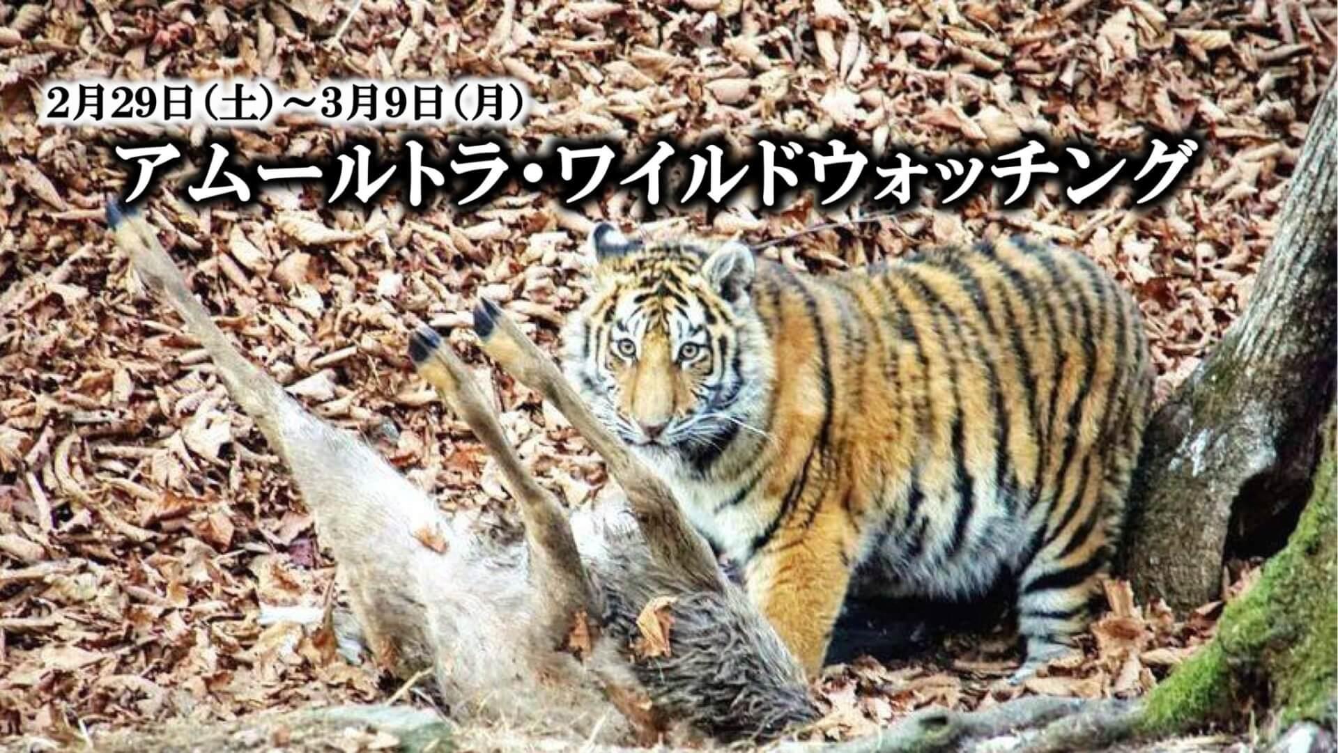 アムールトラ・ワイルドウォッチング【10日間】