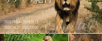 インドライオン、ベンガルトラ、インドヒョウと出会う インド・サファリ紀行