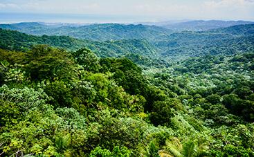 アメリカ唯一の熱帯雨林 エル・ユンケ国有林