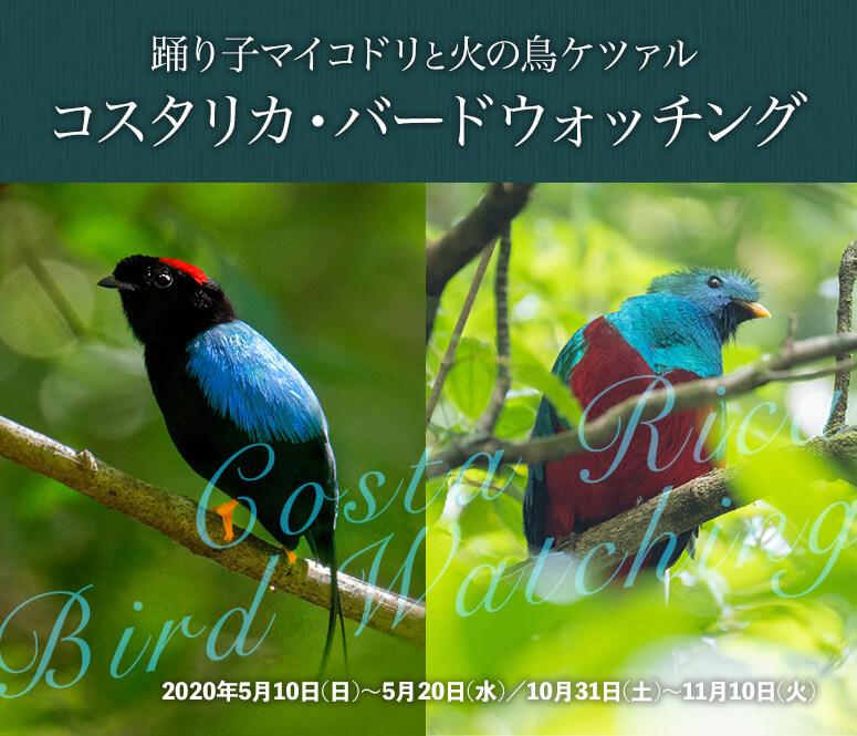 踊り子マイコドリと火の鳥ケツァル コスタリカ・バードウォッチング【11日間】