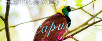 華麗なる極楽鳥の世界 パプアニューギニアで極彩色の鳥を追う【8日間】