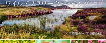 スコットランド、アウター・ヘブリディーズ諸島のワイルドフラワーウォッチング【9日間】