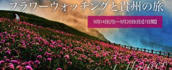 韮菜坪に咲き乱れるニラの花!! 『天上の花海』フラワーウォッチングと貴州の旅【7日間】