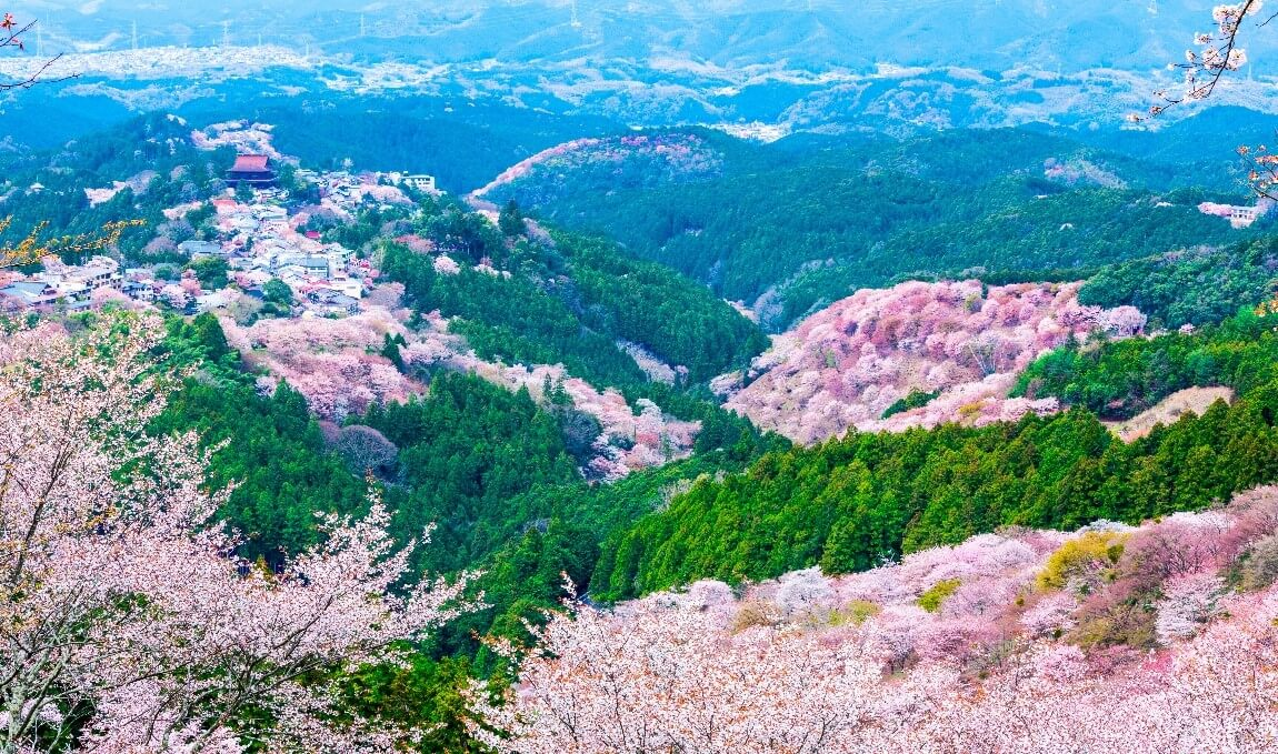 【国内・関西】 吉野の千本桜、花の御寺長谷寺を楽しむ奈良滞在の旅