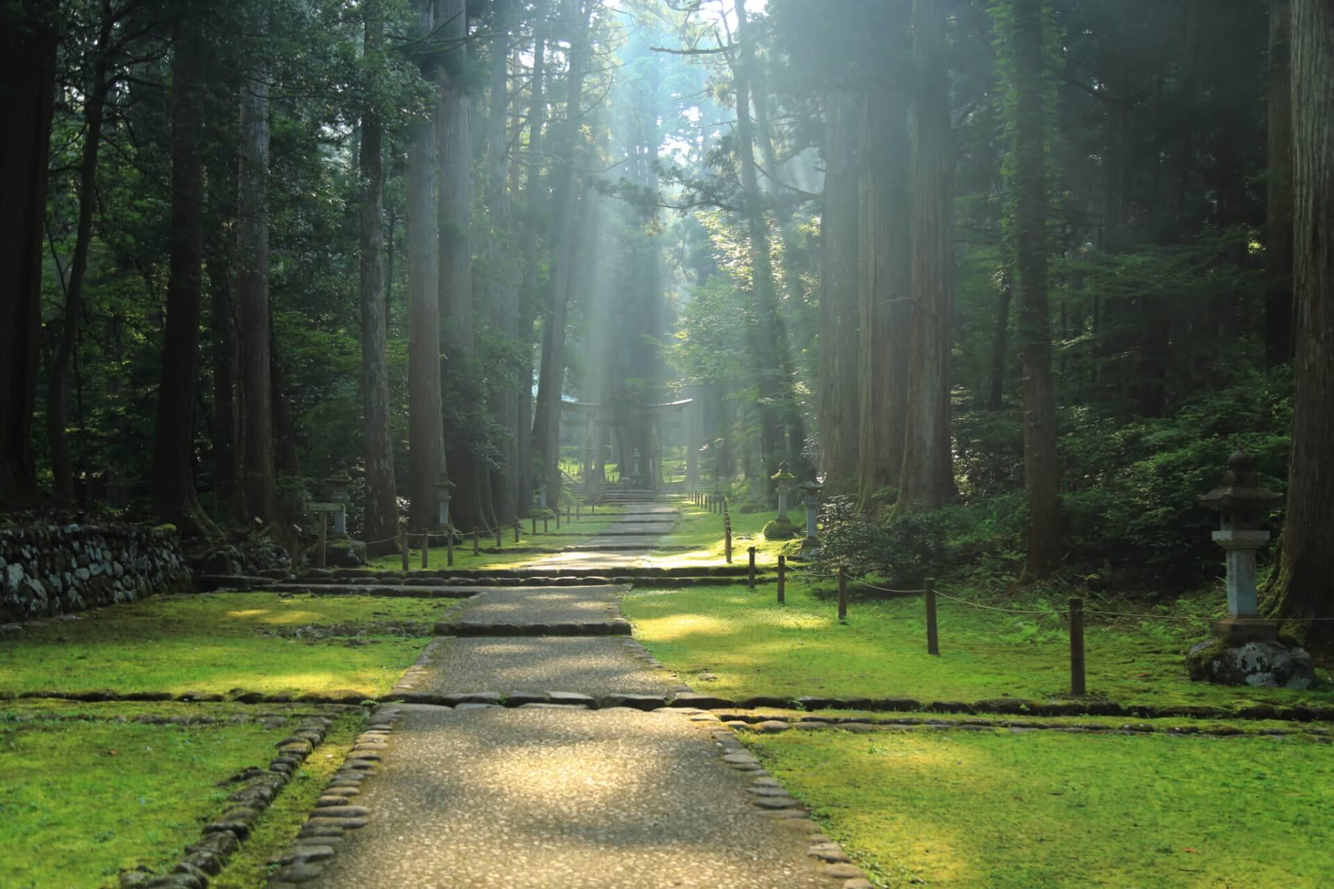 【国内・北陸】 まほろばの苔宮 白山神社平泉寺と宝慶寺、三国湊を歩く 越前滞在の旅